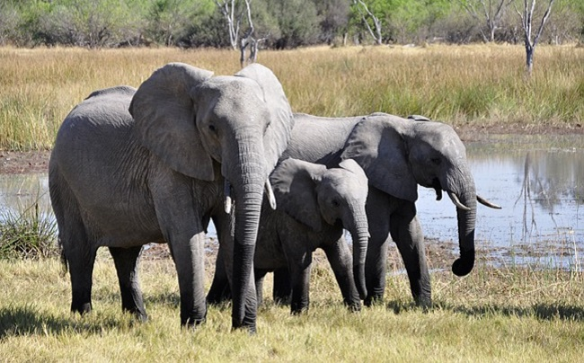dogs help save lives of elephants
