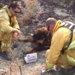 Firefighters Battling Northern California Wildfire Save Burned Dog