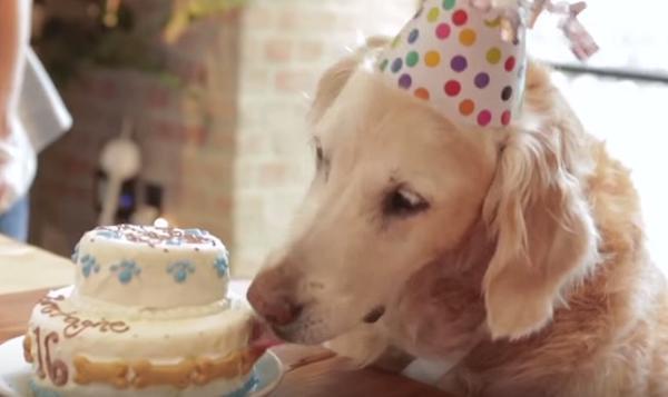Bretagne last surviving Ground Zero search dog