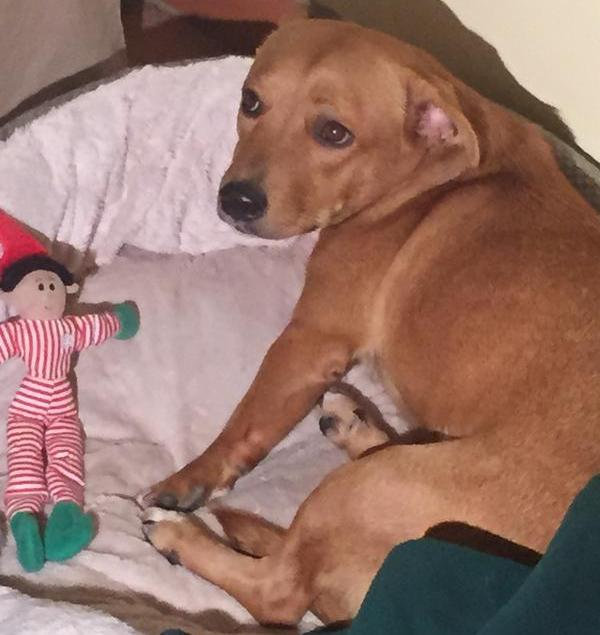 Candi rescued dog saved family from smoke