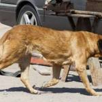 Pregnant Dog in Chile Nursed Malnourished Boy