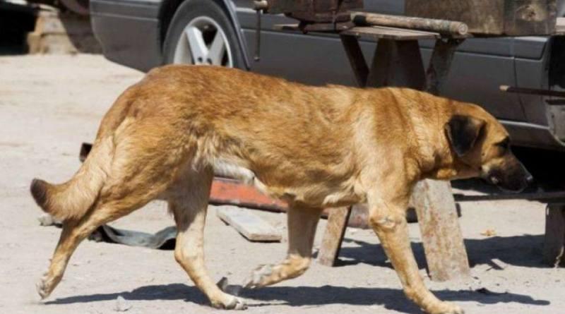 dog breastfed malnourished boy in Chile