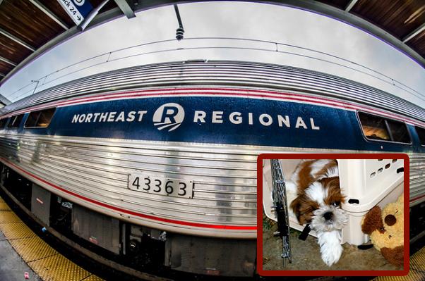 amtrak allows pets on northeastern trains