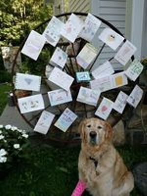 Figo hero guide dog with cards