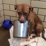 Reddit Comes to the Rescue of Adorable Bucket-Loving Pit Bull