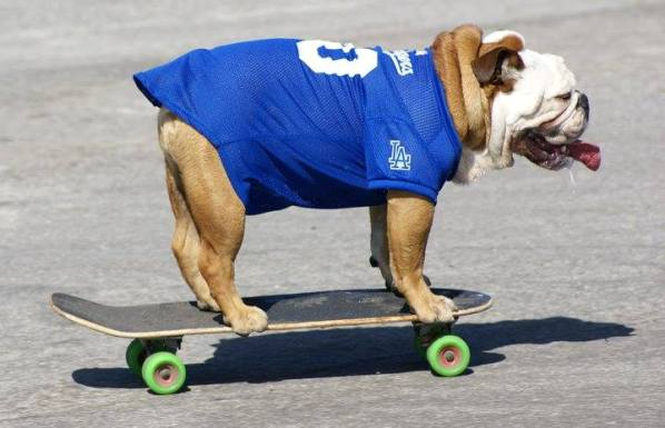 Tillman skateboarding dog