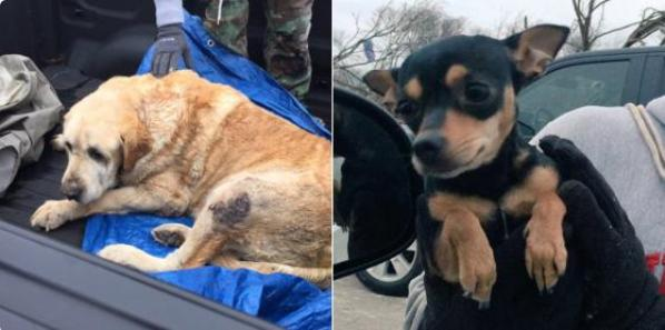 two dogs rescued from rubble of Rowlett Texas tornado