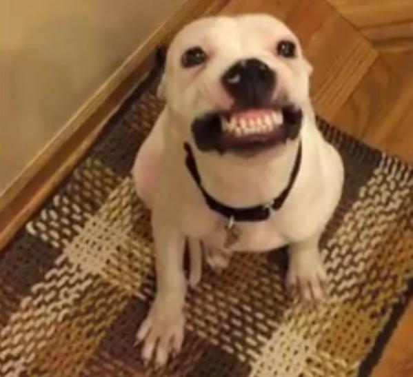 herbert dog says cheese