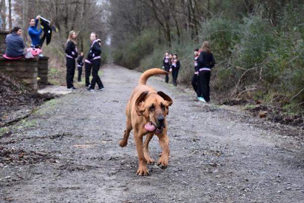 Ludivine dog runs half marathon