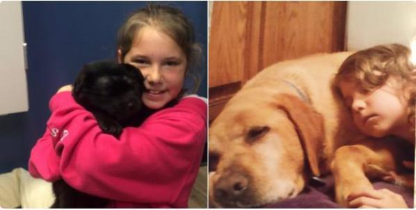 Brody puppy shot with bb gun adopted