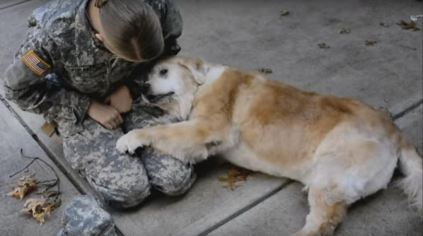 senior dog reunites with soldier dog mom