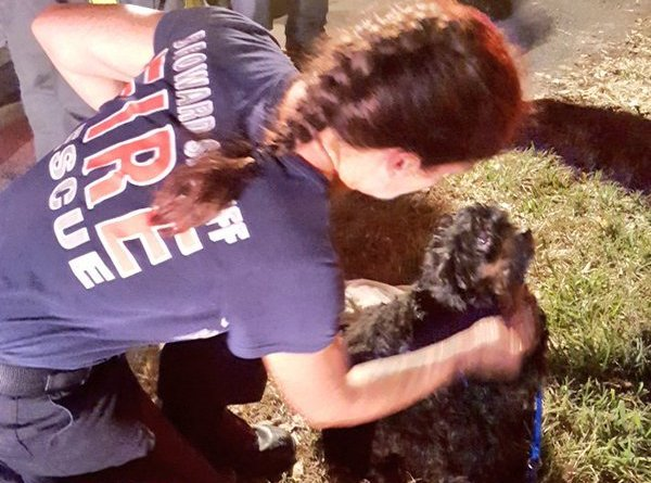34 dogs rescued from Florida house fire