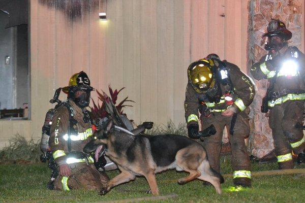 German shepherd leads firefighters to children