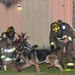 German Shepherd Leads Firefighters to Children in Burning House