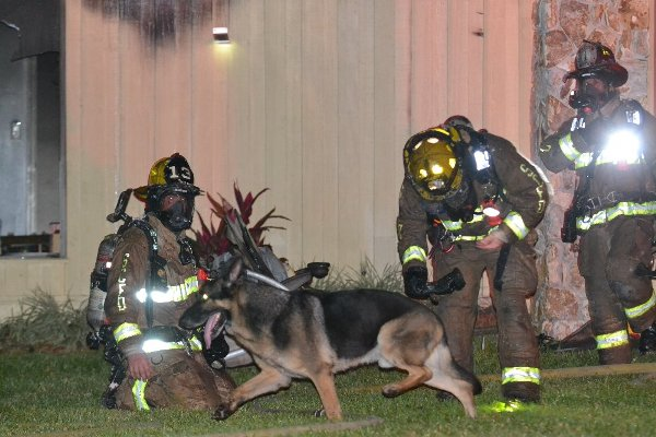 German shepherd leads firefighters to children