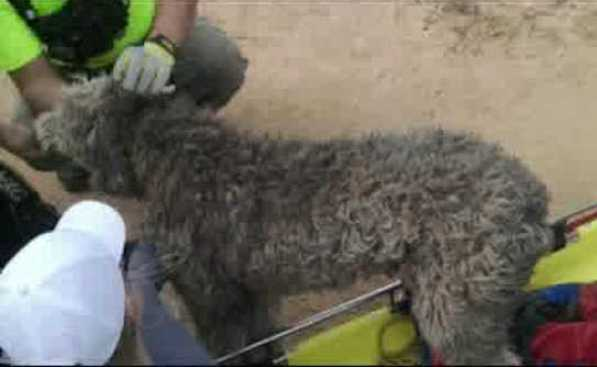 dog fell 300 feet off cliff and lived
