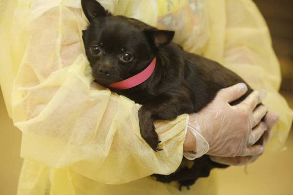 dog rescued from New Jersey hoarders