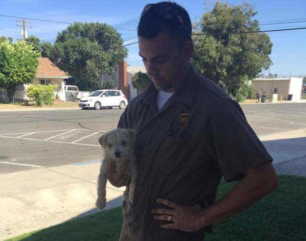 UPS driver rescues dog dumped on road
