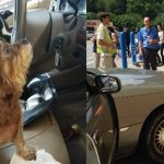 Dog Drivers Crash into Walmart Store (They're OK)