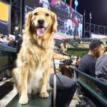 1,122 Four-Legged White Sox Fans Break Guinness World Record