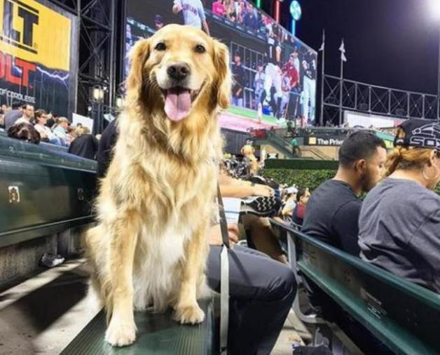 dogs at White Sox game break world record