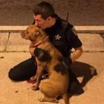 Good Cops! Florida Deputies Comfort Pit Bulls Abandoned in Street