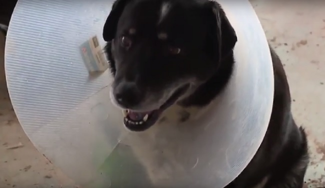 dog survives being picked up by tornado