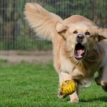A Double Treat for Dog Lovers: 'Dog Bowl' to Join 'Puppy Bowl' in 2018