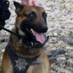 Police Dog Opens Gate to Save Partner from Attack