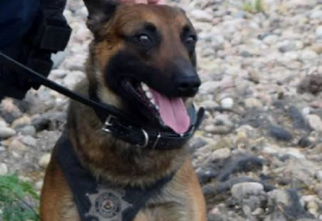 Police dog Lex opened gate with paw to save partner