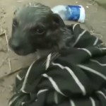 Watch a Hero Use a Plastic Bottle to Revive a Puppy That Almost Drowned