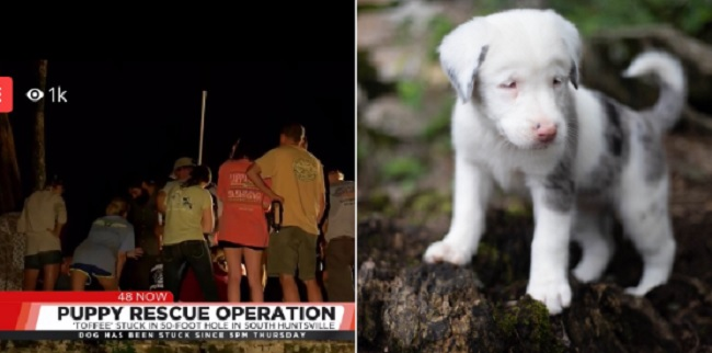 deaf puppy rescued from 50-foot hole