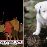 After 31 Hours, Deaf Puppy Rescued from 50-Foot Hole
