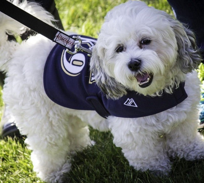 Milwaukee Brewers mascot Hank the Dog