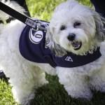 Whatever Happened to Milwaukee Brewers Mascot Hank the Dog?