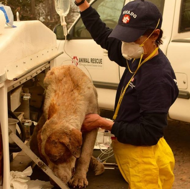 Dog rescued from Camp Fire wildfire in California