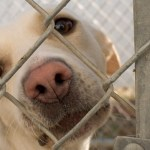 What You Should Know Before Adopting a Shelter Dog