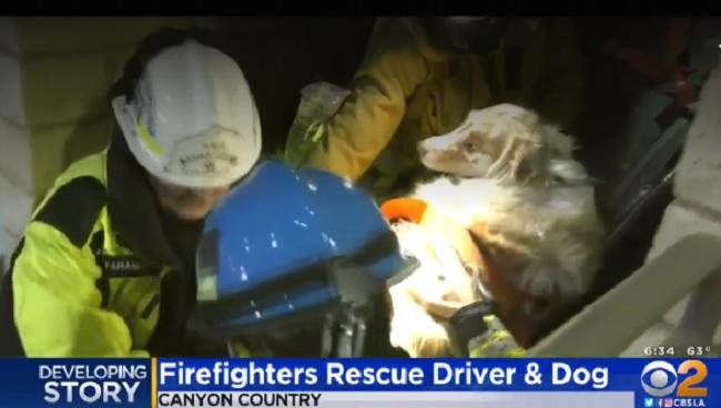 firefighters rush dog to animal hospital