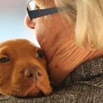 Funeral Therapy Dogs Provide Furry Comfort to Mourners