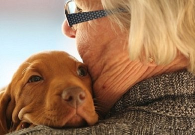 funeral comfort dogs