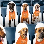 Adoptable Dog Cutouts Will Fill Empty Seats in Philadelphia's Subaru Park Stadium