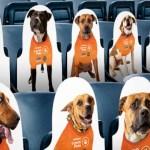 Adoptable Dog Cutouts Will Fill Empty Seats in Philadelphia's Subaru Park Stadium