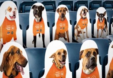 Subaru Stadium Adoptable Dog Cutouts