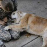 Tissue (Box) Alert! Watch Veterans Reunite with Their Beloved Dogs