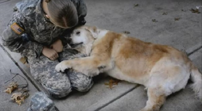 veteran reunites with dog