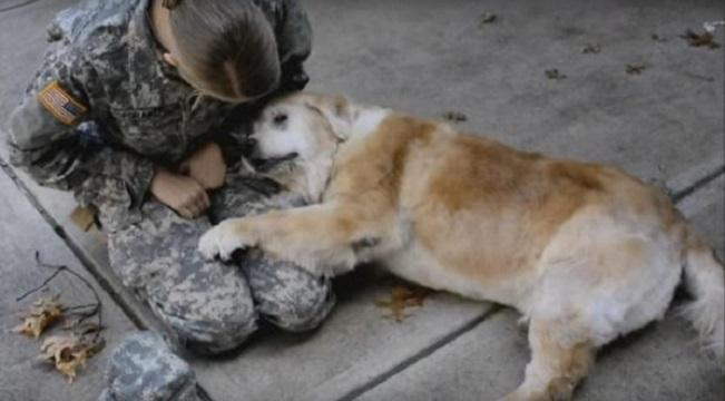 veteran reunites with dog