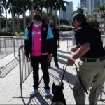 COVID Detection Dogs Will Check Miami Heat Fans