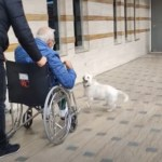 Devoted Dog Follows Owner to Hospital and Waits for Him There