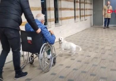 Dog follows owner to Turkey hospital