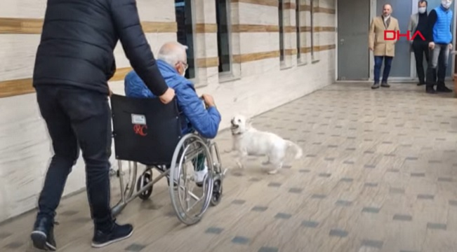 Dog follows owner to Turkey hospital